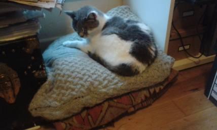 Bessa, aka CAT.